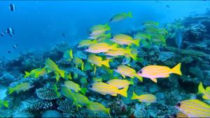 fish yel