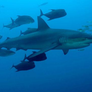 Nonno, cos'è uno squalo?