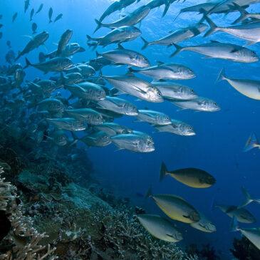 I pesci lasceranno l'equatore?