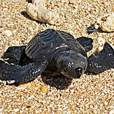 Gli anni perduti delle tartarughe