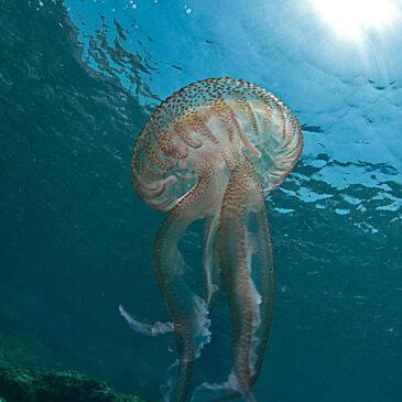 Contiamo le meduse