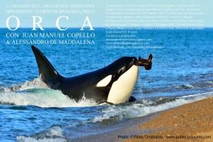Spedizione in Patagonia. Biologia delle Orche @ Patagonia | Puerto Madryn | Provincia di Chubut | Argentina