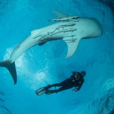Allarme genetico per gli squali balena