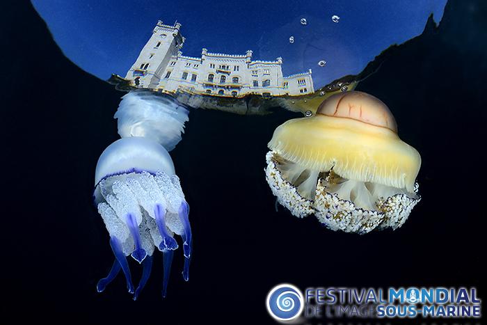 Rhyzostoma e Cothyloriza sotto castello Miramare