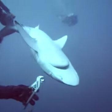 Sub coraggioso toglie l'amo allo squalo