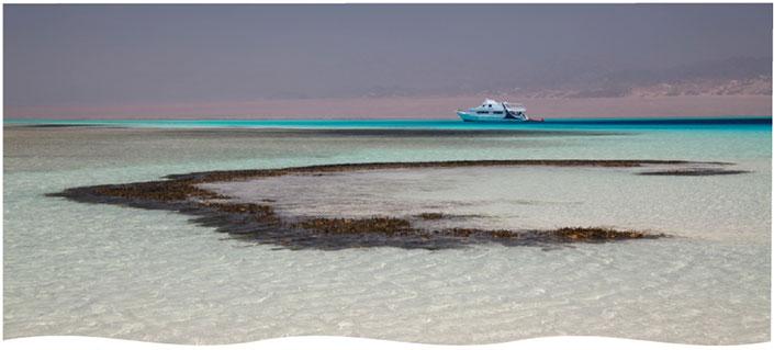 Crociera sub a Sharm in Luglio – Euro 575,00