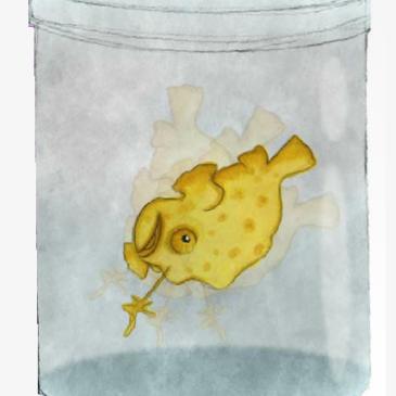 Gino il frogfish nel trasportino