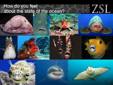 Oceanottimismo