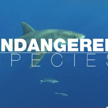 Endangered species – il film