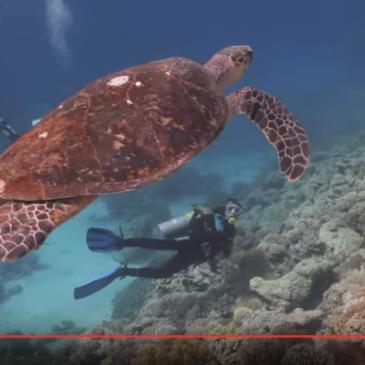 Ras Goma – un video per una immersione poco conosciuta