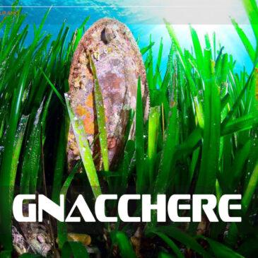 Gnacchere