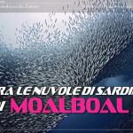 Tra le nuvole di sardine di Moalboal