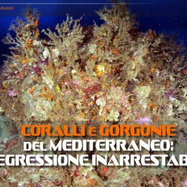 Coralli e gorgonie del Mediterraneo: regressione inarrestabile