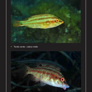 Il pesce del principiante