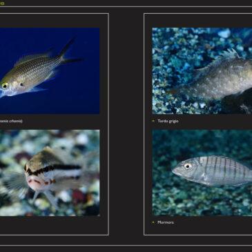 Safari Fotosub, Esame di Ritorno