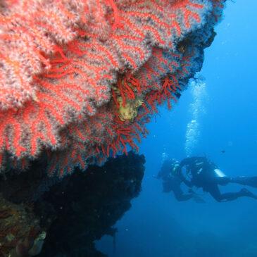Costa Paradiso diving center
