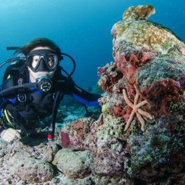 Normative e specifiche tecniche di riferimento per l'attività subacquea ricreativa