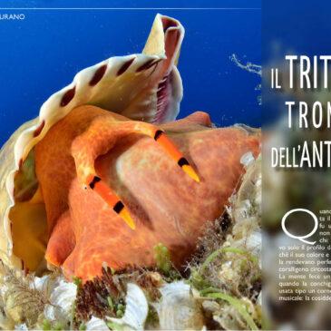 Il tritone, tromba dell'antichità