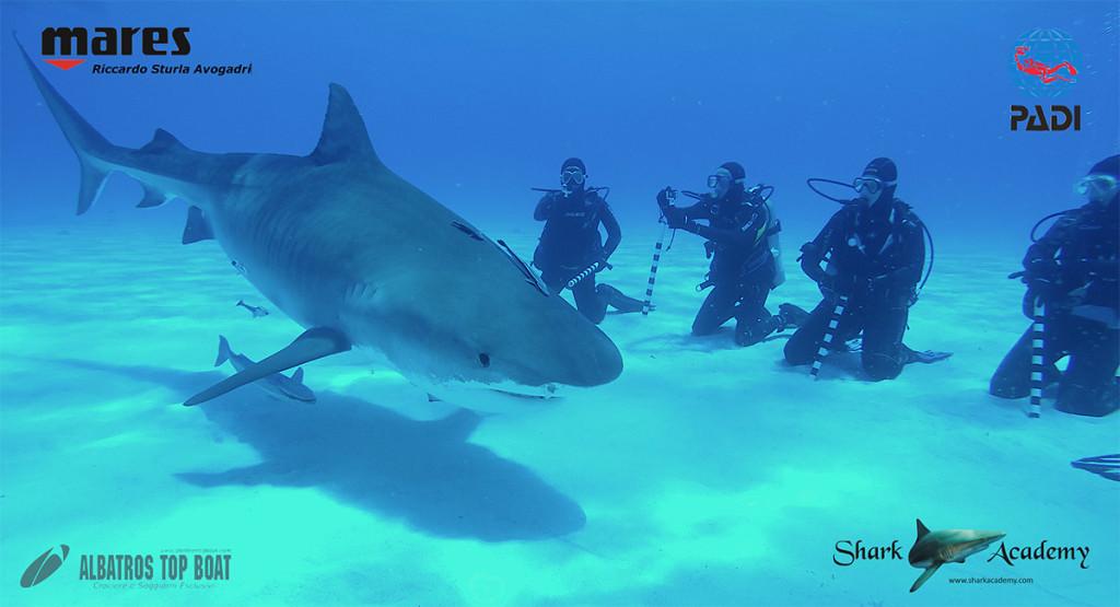 maldive sud