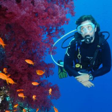 7 cose che non sai su 7 siti di immersione di Sharm El Sheikh
