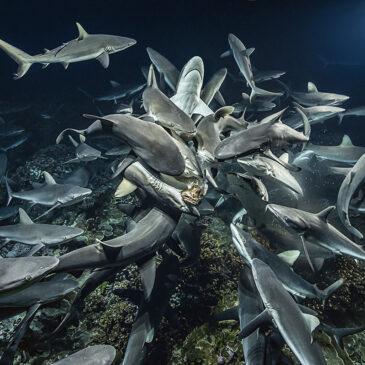 La notte dei 700 squali