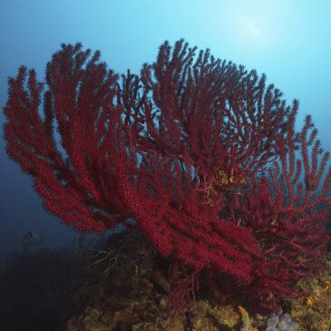 Diving Biodivers a Porto Azzurro
