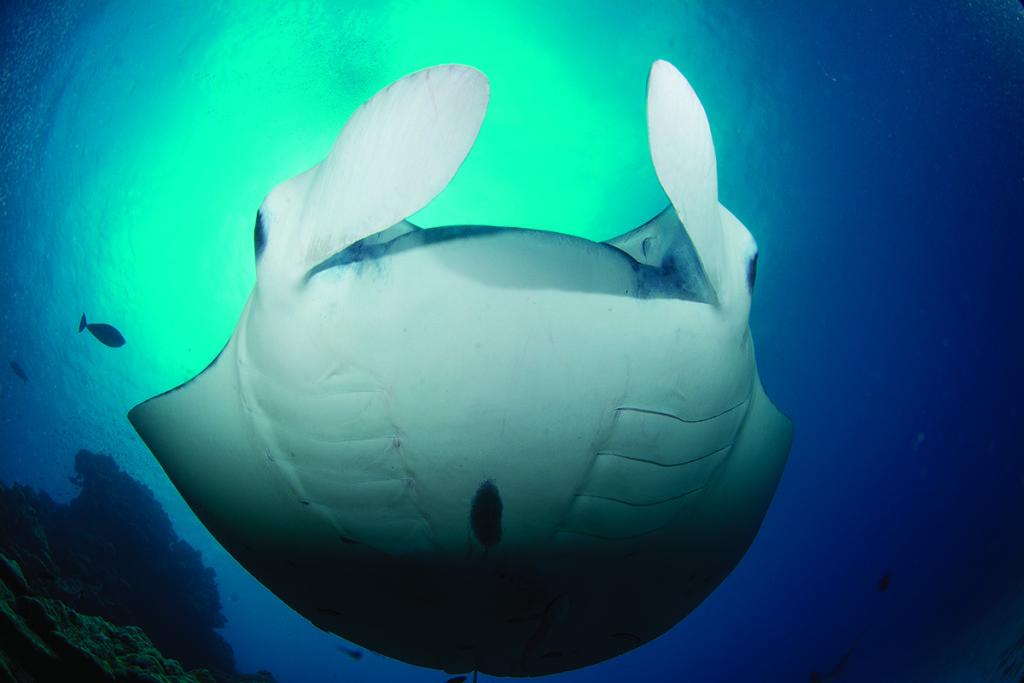viaggio subacqueo