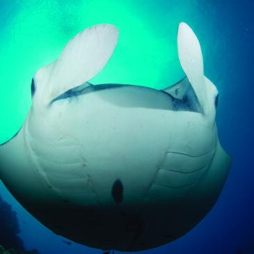 Nosytour: il viaggio subacqueo 2.0