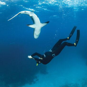 Imparare ad amare gli squali: intervista a Erich Ritter