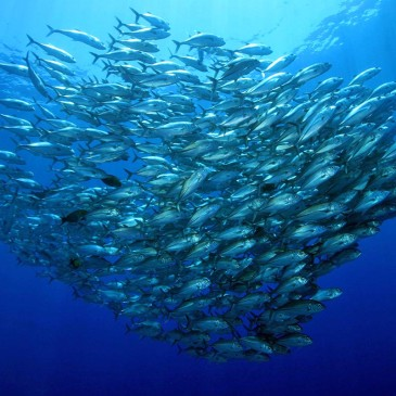Tubbataha Reef, la punta di diamante delle Filippine
