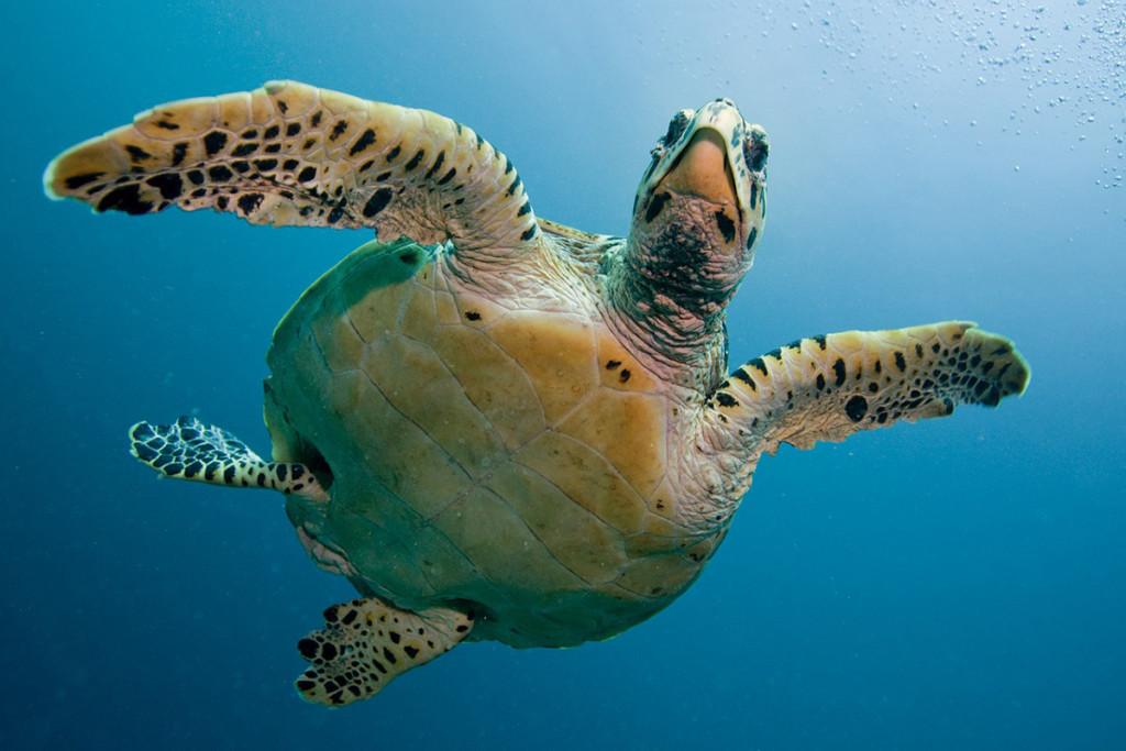 turtle-1200x800
