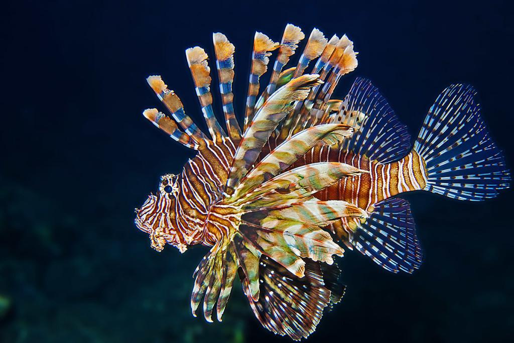 fotografare i pesci