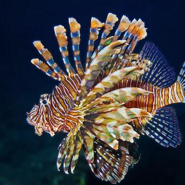 Fotografare i pesci in apnea