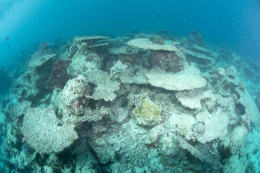 coralli morti