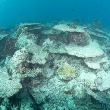 Il fantasma dei coralli morti
