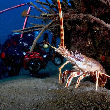 La nobile aragosta del Mediterraneo