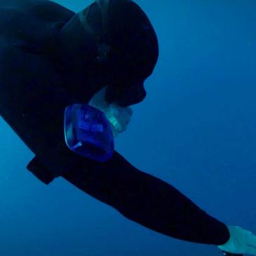 Sharknet, un innovativo strumento di sicurezza e allenamento