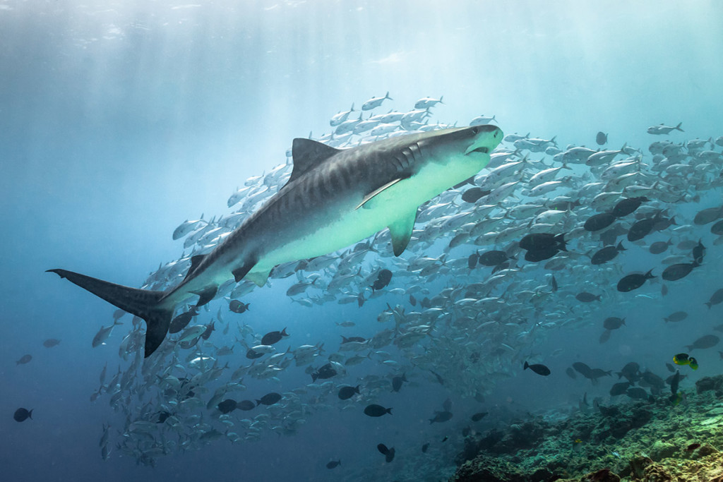 isola degli squali
