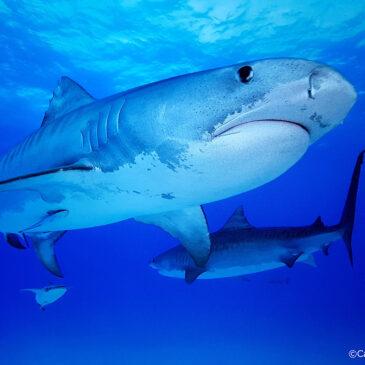 Nelle pass con gli squali