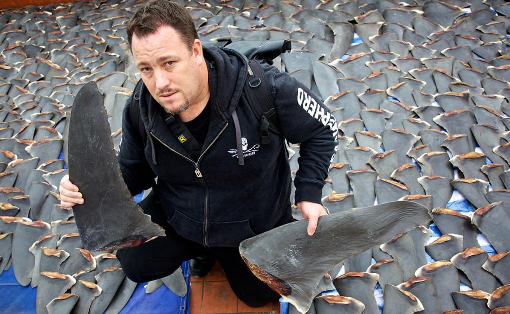 difesa degli squali