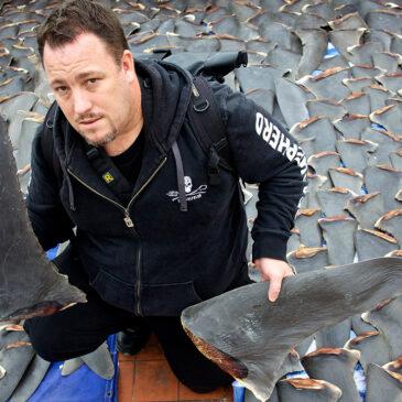 Le campagne a difesa degli squali: Sea Shepherd