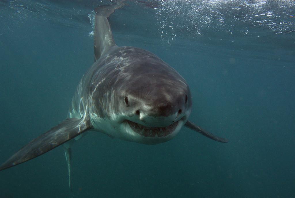 immergersi con gli squali