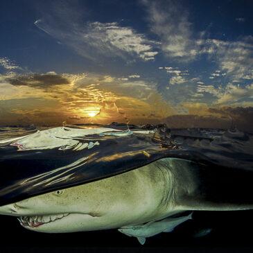 portfolio di Sergio Riccardo: squali