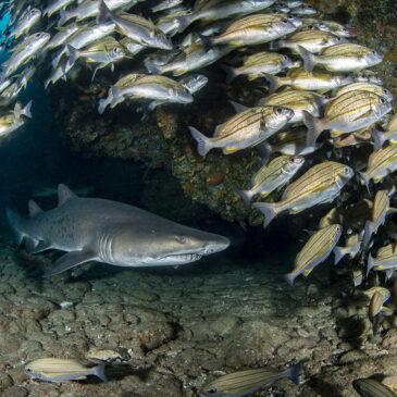 Sud Africa: dalla False Bay alla Wild Coast