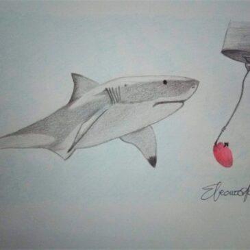 Shark culling: quando il pericolo non viene dal mare