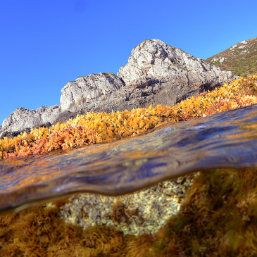 Metamorfosi dei fondali: alghe del Mediterraneo
