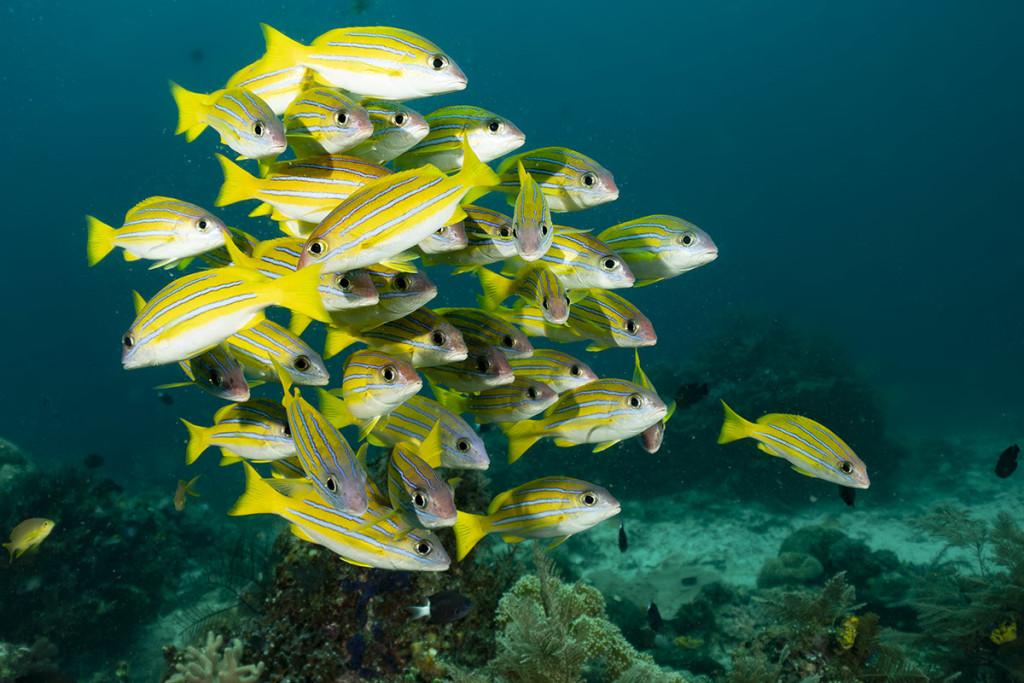 benessere nei pesci