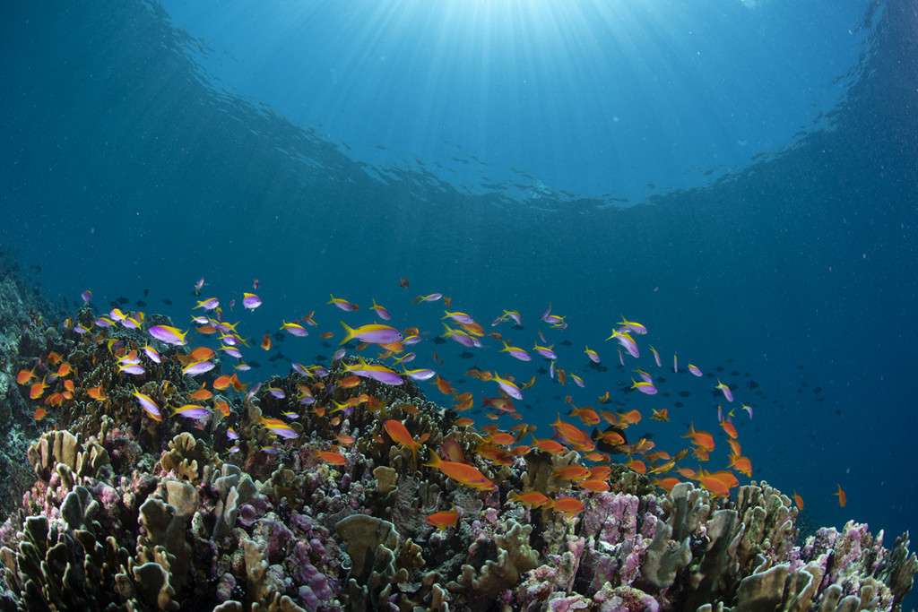 workshop sui pesci di reef