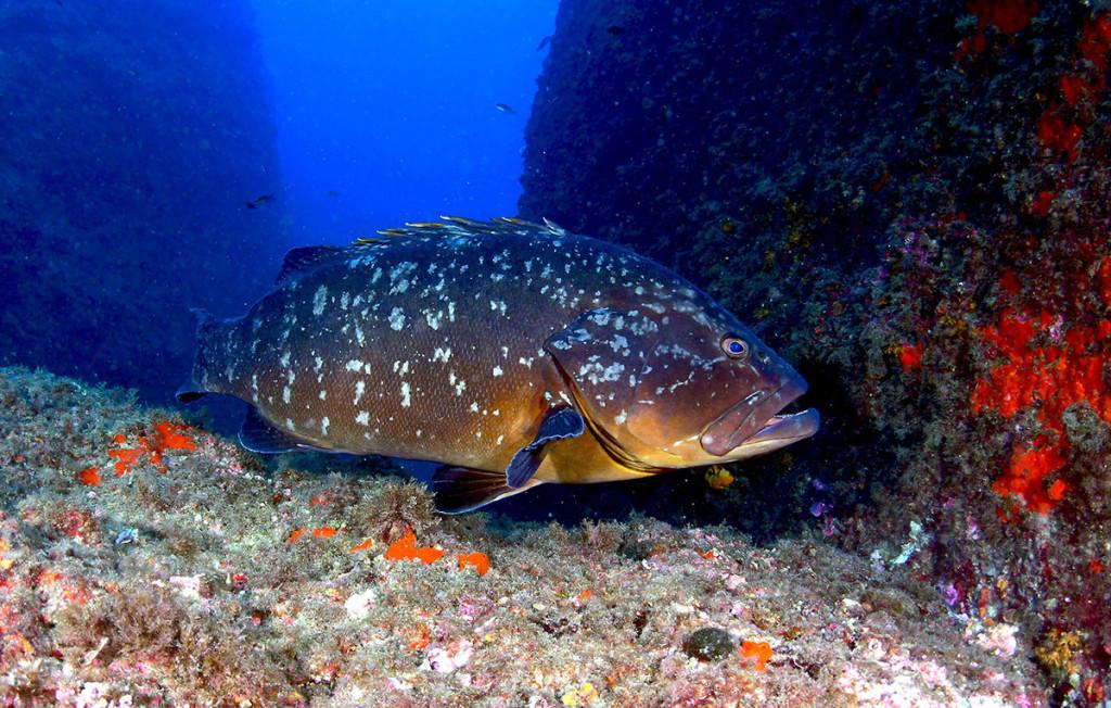 aree marine protette
