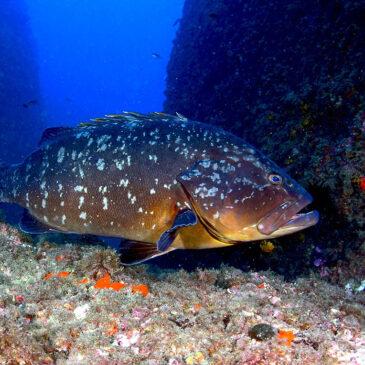 Santa d'amare, conoscere il mare con le aree marine protette